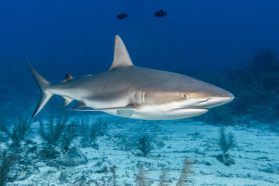 Poker Shark – What One is and How to Become One